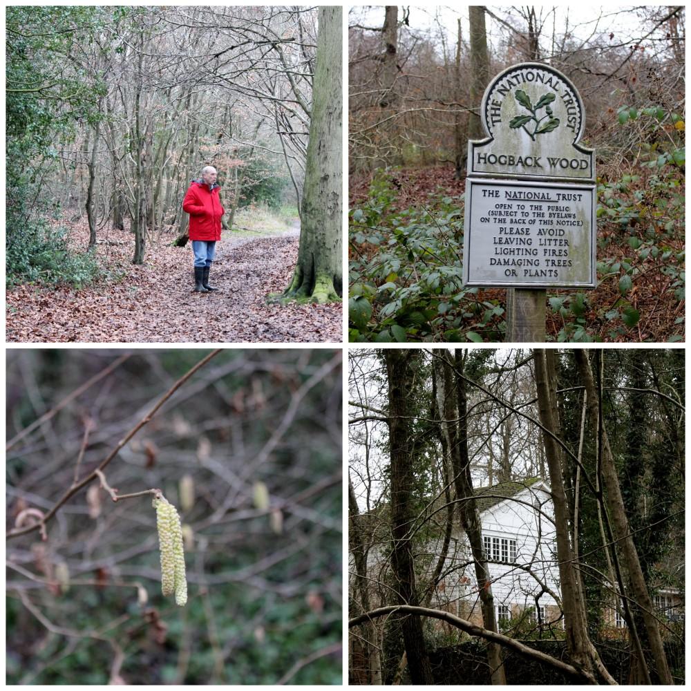 Hogback Wood